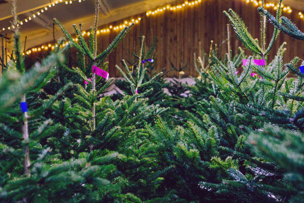 Locally Grown Christmas Trees